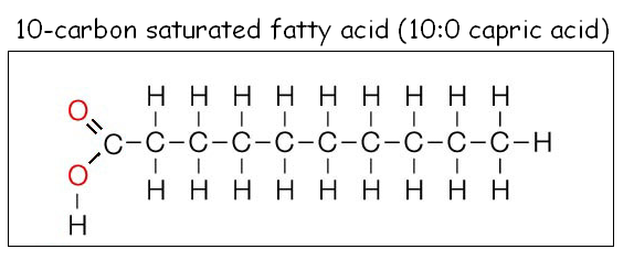 Saturated Fats  What Is Saturated Fat